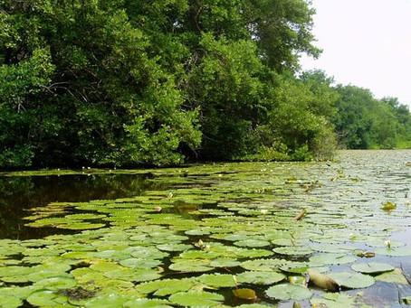 Debe primar el cuidado por el medio ambiente para que Barranquilla sea una biodiverciudad