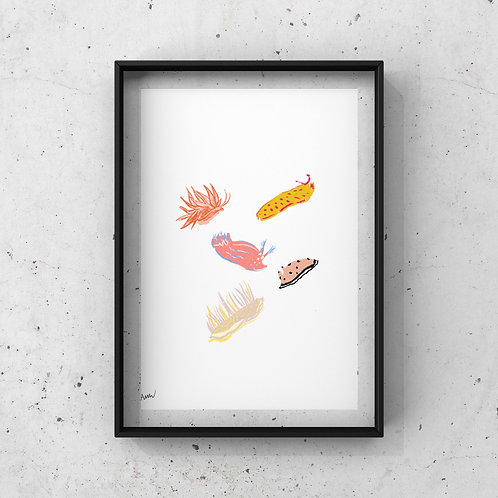 Nudibranch Print