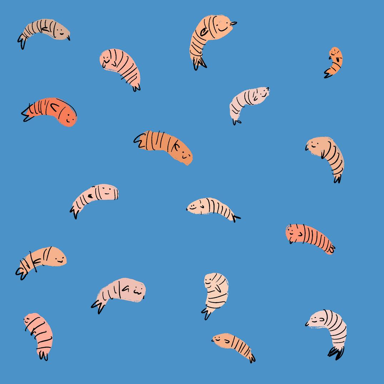 shrimp fete