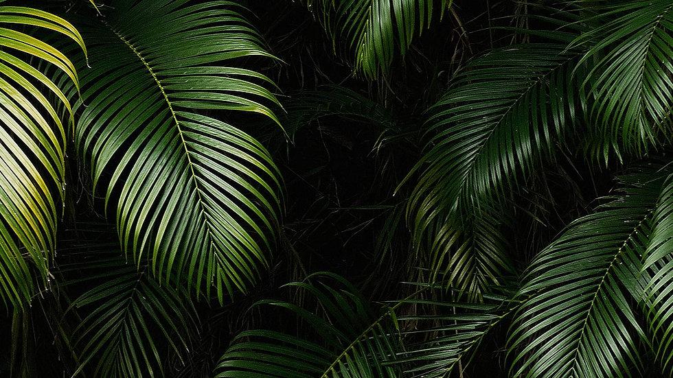 Jungle-background-4.jpg