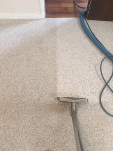 Carpet Cleaning_During Process