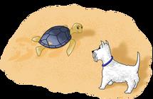 A Tartaruga Marinha - Jojó e Pipoca