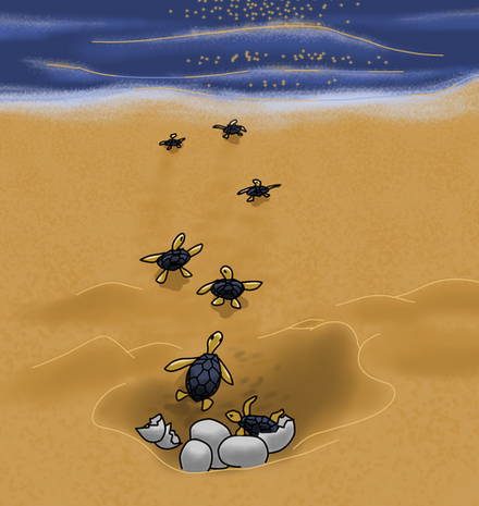 A Tartaruga Marinha - as tartaruguinhas