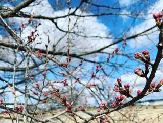 「第41回天平の花まつり」中止のお知らせ