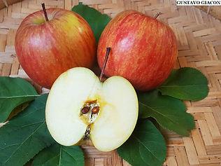 maçã fuji