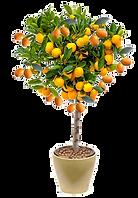 laranja capa T.png