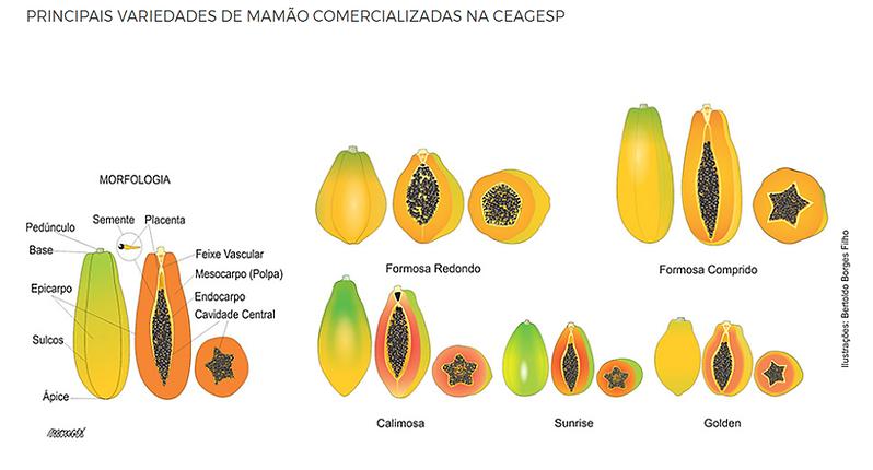 variedades de mamao