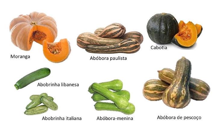 variedades de abóbora