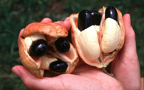 fruta akee