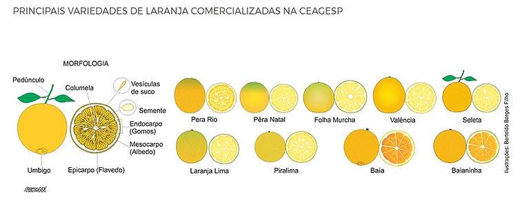variedades de laranja