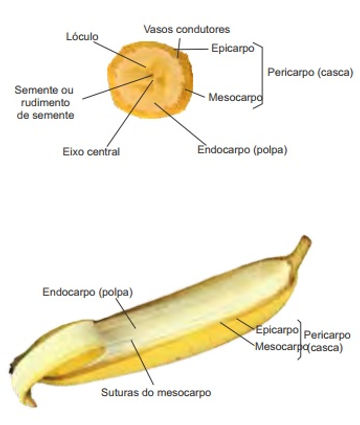 caracteristica banana