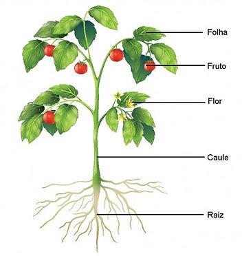 botânica resumo