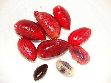 fruta do milagre muda