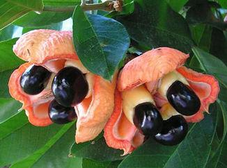 akee frutas