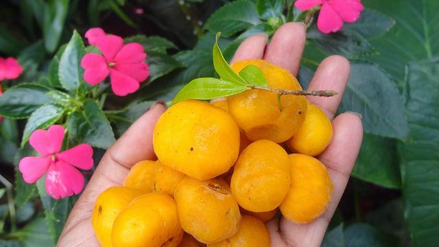 suco de uvaia