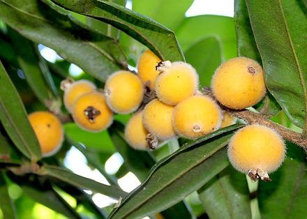 cabeludinha fruta