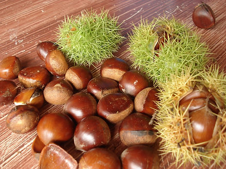 castanha portuguesa fruta