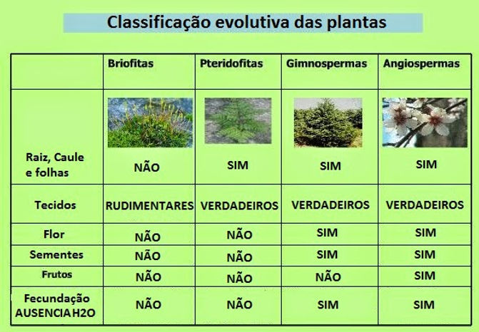 classificaçã evolutiva das plantas