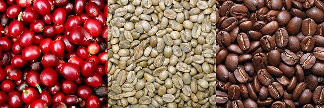 variedades de cafés