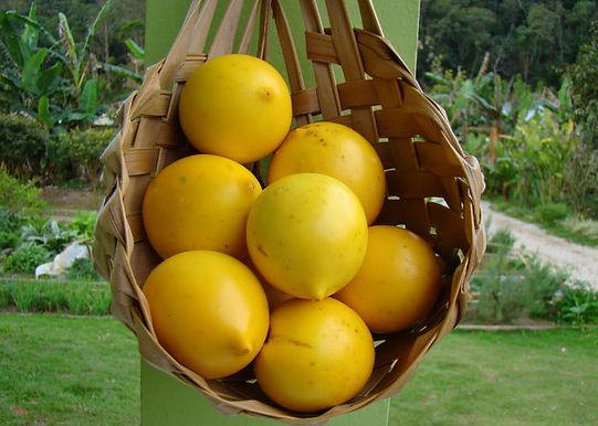 fruta abiu