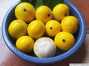 fruta bacupari