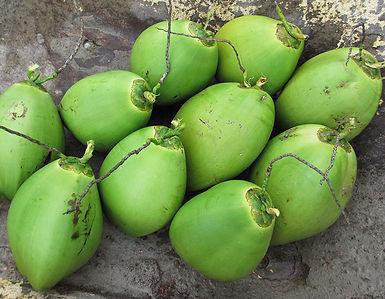 plantar coco