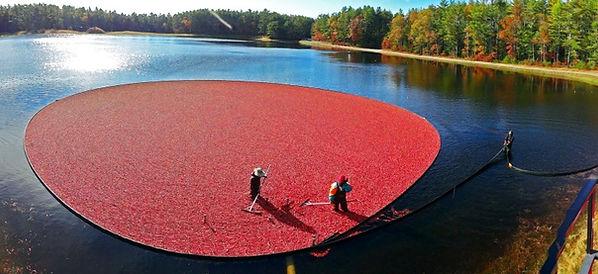 cápsulas de cranberry
