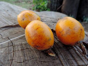 fruta gravatá onde comprar