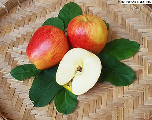maçã ana