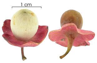 fruta heiteria