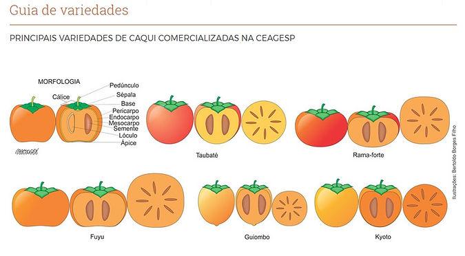variedades de caqui