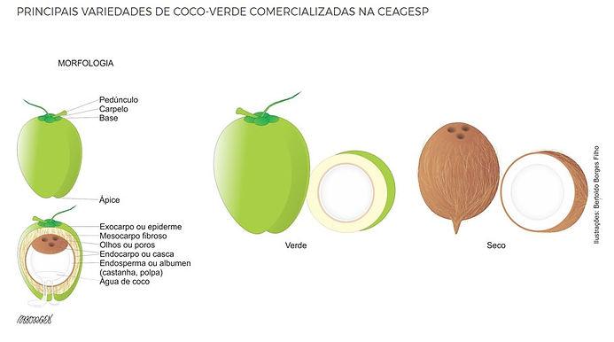 variedades de coco