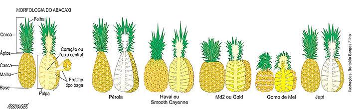 características abacaxi