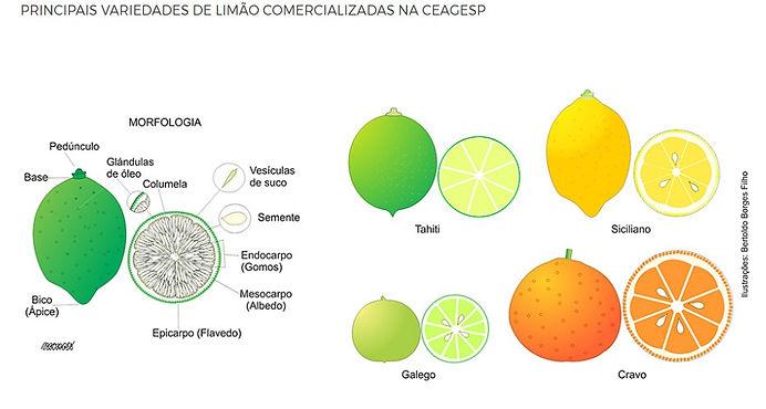 variedades de limão