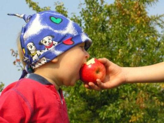 maçã engorda