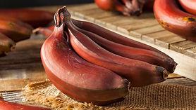penca banana vermelha
