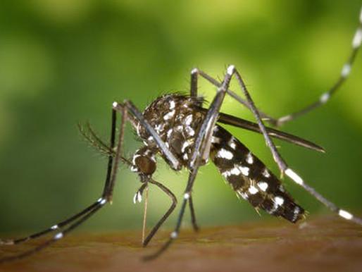 Prefeitura realiza força-tarefa em dez bairros contra o mosquito da Dengue