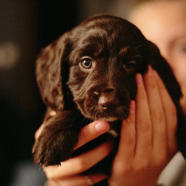 Puppy socialisation and habituation