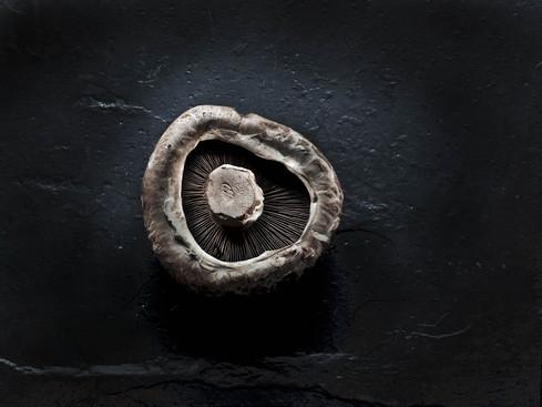 mushroom-on-slate-copy.jpg