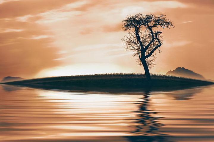 tree-716127_1920.jpg