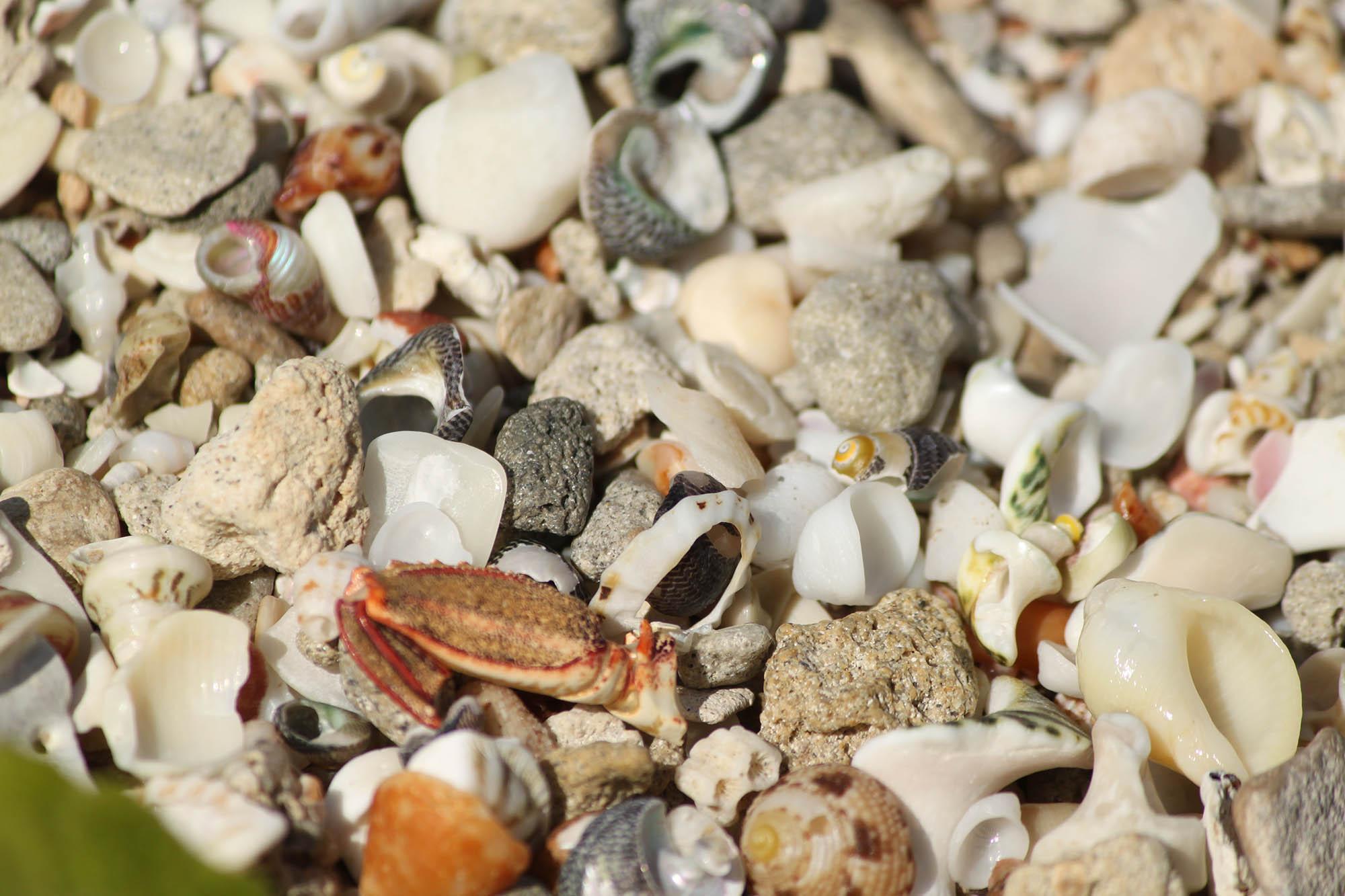 Vivonne Bay Sea Shells