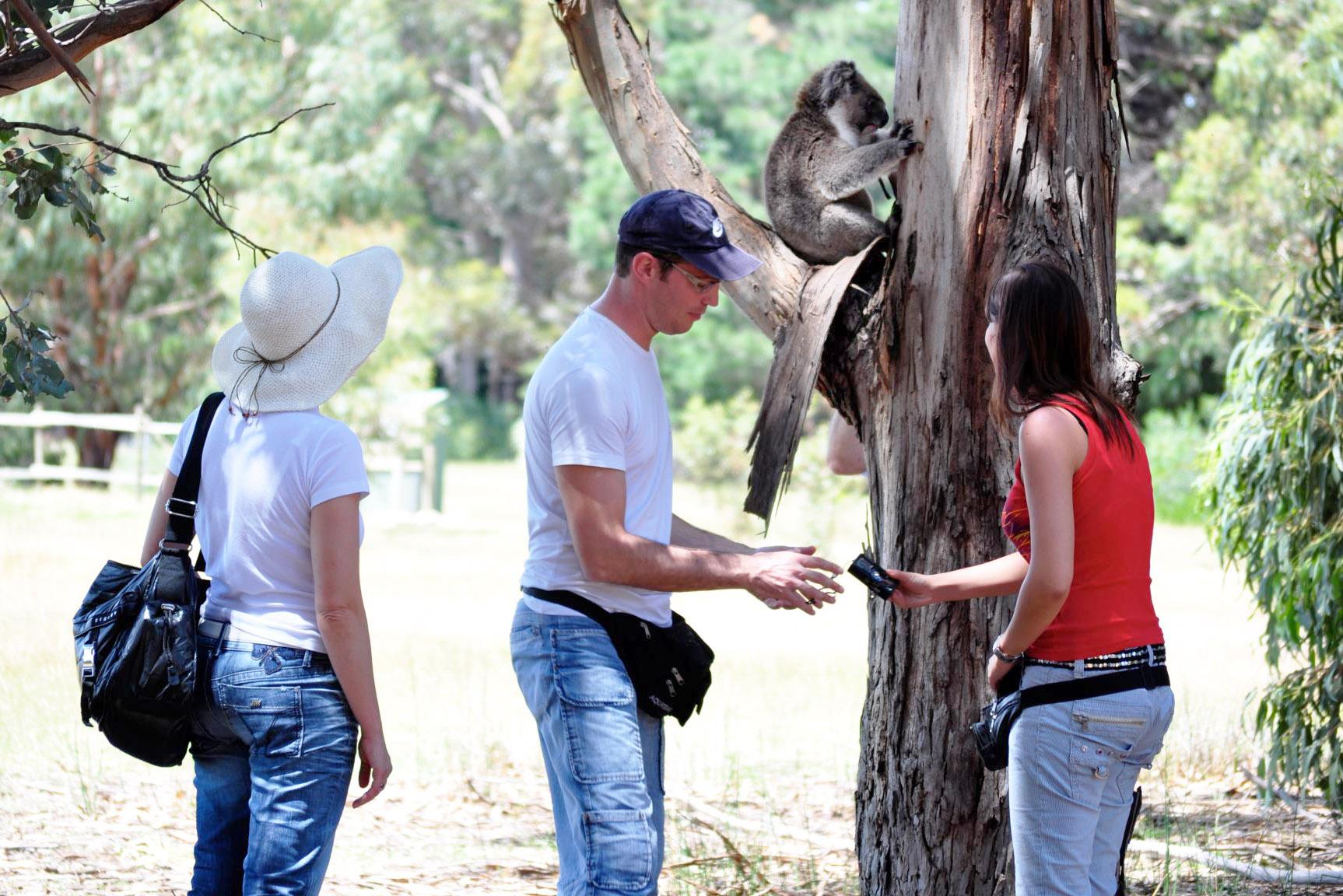 tours kangaroo island Australia