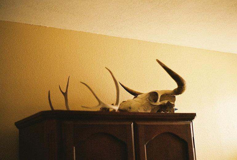 skulls in the bedroom