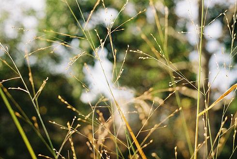 death metal grass