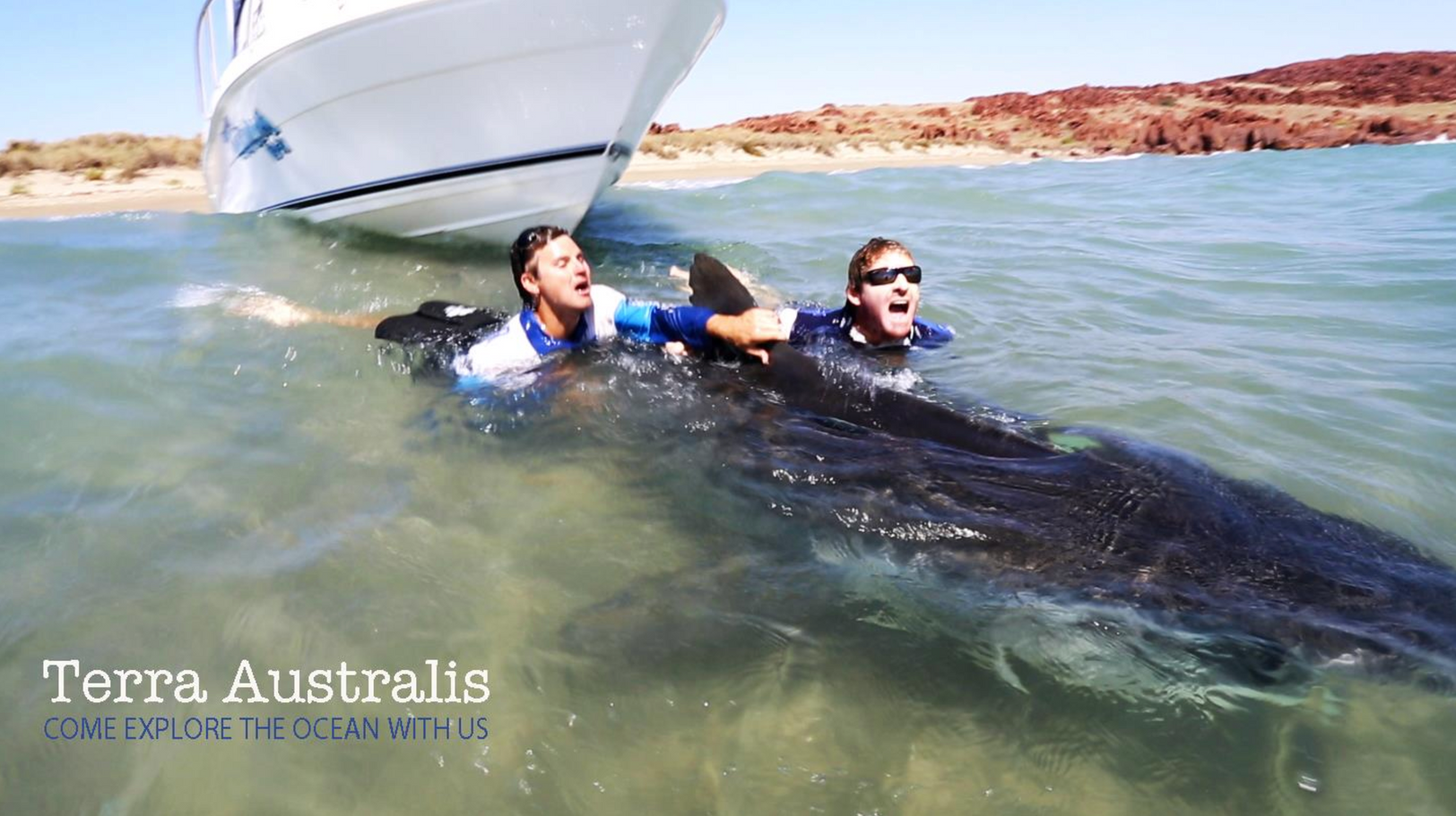 Terra Australis Tags a 4 meter tiger shark