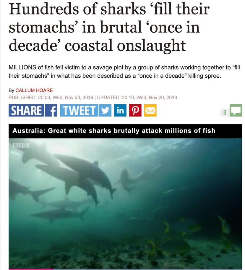 "Terra Australis shark feeding frenzy featured in David Attenborough's new series ""Seven Worlds, One Planet"""