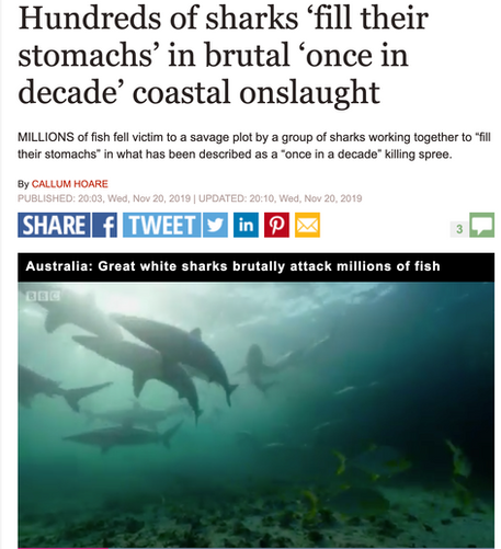 "Terra Australis shark feeding frenzy featured in David Attenborough's new series ""Seven Worlds, One Planet"""