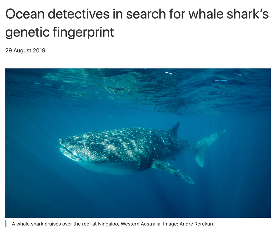 Terra Australis joins government researchers on whale shark research