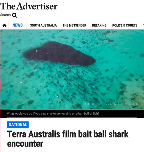 Terra Australis film the biggest Shark feeding frenzy ever in Western Australia