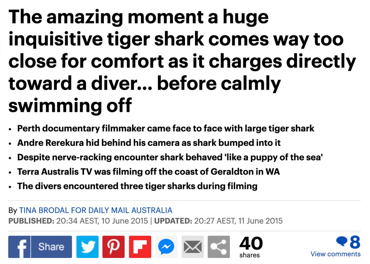 Terra Australis tiger shark encounter makes headlines